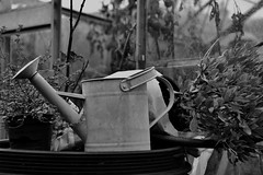 294/366 The Watering Can ! (timmynomates2003) Tags: mono 294366 366 365