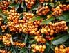 Plenty for  all (claireartistpoet) Tags: orange otw