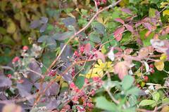 DSC_0508 (Pter_Szab) Tags: mtra matra hungary nature autumn colours mountains galyateto galyatet forest hiking nationalpark landscape