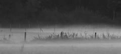 Test shots canon ef lens EF200-400mm f/4 L IS USM Extender 1,4x. Autumn misty evening light. Higher ISO values. With and without extender. Noise manipulation in Lightroom. (annick vanderschelden) Tags: canon lens product 1 4xextender imagestabilizer canonef200400mmf4lisusmextender1 4x highperformance telephoto zoom eos camera ultrasonicmotor focaldistance fluorite ud lenselements superiordefinition swc subwavelengthstructurecoating flareandghosting fluorine test highiso misty grain noise nature deerlijk degavers
