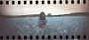 film (La fille renne) Tags: film analog 35mm lafillerenne woman model portrait sprocketrocket lomography lomochrome lomochrometurquoise lomochrometurquoisexr100400 turquoise ladybiche nature