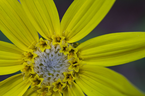 Closeup on second yellow flower