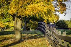 autum fence line (glenn.footprintsintime) Tags: fallleaves fenceline farm trees