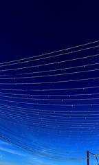 Town web (ZUHMHA) Tags: france géométrie geometry line ligne courbe curve angle silhouette contour matière texture grille grillage fence marseille blue bleu lampe light ciel sky color couleur