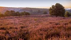 Ein schöner Morgen (Hildegard Spickenbaum) Tags: postbank niederlande heidelandschaft frühermorgen