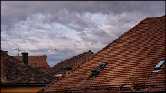 Morning on the Rooftops (Firery Broome) Tags: roof rooftops morning earlymorning morninglight rooftiles tile windows roofwindows clouds grayclouds blue bluesky redroof architecture autumn buildings birds red orange brick chimney europe europe2014 croatia olympus olympusem10 photoshop viveza colorefexpro cityscape cityrooftops travel worldtravel windowwednesdays everydayobject sky cloudporn 365
