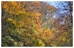 Reflets de feuilles sur l'étang...Reflection of leaves on the pond... (isabelle.bienfait) Tags: automne autumn season saison reflets feuille leaves reflexion couleurs nikond5100 sigma105 isabellebienfait graphisme abstrait abstract