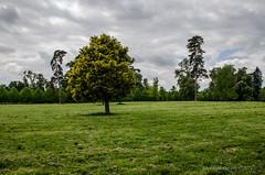 Alone (fabakira) Tags: fabakiraphotography fabakira fabakiraphotography2016 nikon d7000 sigma sigma1750 arbre paysage couleur ciel regard herbe versailles