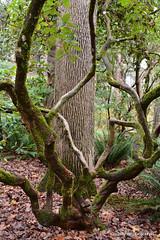 Twiggy  tree (JSB PHOTOGRAPHS) Tags: jsb0274 tree hindricks park twiggy