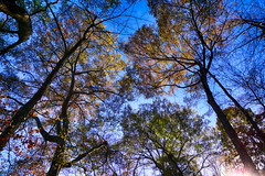 DSC09082-84_HDR (Capt Kodak) Tags: autumn chattahoocheerivernationalrecreationarea fall hdrefexpro2 madefrom3images medlockbridgepark nationalparkservice nikcollectionbygoogle niksoftware photomerge