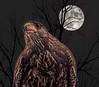Nighthawk (Wes Iversen) Tags: grandblanc hss holly michigan michiganrenaissancefestival nikkor18300mm sliderssunday supermoon tamron150600mm birds composites hawks moon nature raptors silhouettes trees