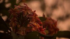 Flowers in the sunset (Matt.D photography) Tags: sunset flowers canon canon5d closeup beautiful