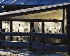 (:Linda:) Tags: germany thuringia village bürden hoarfrost greenhouse window