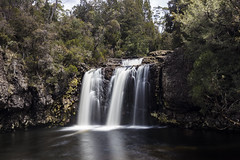 Pencil Pines Falls, Tasmania (Steven Penton) Tags: tasmania australia cradle mountain pencil pines falls