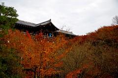 Autumn leaves looked up (tez-guitar) Tags: temple autumn autum 紅葉 autumn leaf leaves tree trees kyoto architect red pentax pentaxart