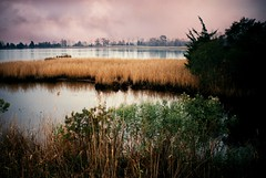 R2-20-8A (David Swift Photography Thanks for 19 million view) Tags: davidswiftphotography newjersey wetlands marsh water lakes islands scenic 35mm film fujicolor nikonf2 saltgrass nature