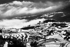 Cloud over Yuanyang Rice Terrace (lycheng99) Tags: yuanyang china yunnan landscape yuanyangriceterrace riceterraces rice terrace terracefarming clouds seaofclouds morning sunrise dawn mountains contour curves