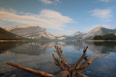 Upper Kananaskis Lake walk round Aug 2015 (davebloggs007) Tags: upper kananaskis lake walk round aug 2015 alberta canada mount indefatigable tree stump