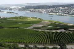 RhinRudesheim_20150806_035 (bourjean29) Tags: canon vin bateau allemagne vigne raisin fleuve croisire chteaux rhin canonmk2 jeanbourgeois