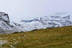 Under observation (balu51) Tags: schnee autumn mountain snow cold hiking herbst wiese windy september berge kalt marmots wanderung wolkig 2015 graubnden windig hochmoor murmeltiere naturparkbeverin copyrightbybalu51