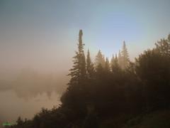 They wait in the mist. (Yolanta Z) Tags: stagathe