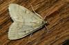 20140215-DSC07154 klein.jpg (henk.wallays) Tags: 1999 aaaa arthropoda date falter henkwallays insect lepidoptera micromoths pyralidae pyralidaespecies schmetterlinge vlinders closeup insecta insecte insekt lichtmot lichtmotten macro nature natuur pyralid skubvlerkiges snoutmoth snoutmoths snuitmot snuitmotten wildlife лускакрылыя тәңкәҡанатлылар күбәләктәр матылі