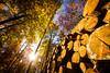 IMG_7827.jpg (vossemer) Tags: bäume sonnenstrahlen orte pflanzen stimmungen herbst jahreszeiten lichtspiele wetter städte laub landschaften freie und hansestadt wald natur abendlicht hamburgfreieundhansestadt deutschland de parks