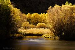 Fall Aspens (Joerg Rockenberger) Tags: california longexposure autumn usa tree nature creek landscape hill brush junelakeloop