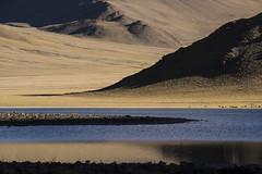CYM_6011 (nature1970613) Tags: china tibet