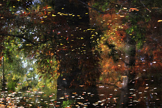Autumn reflections III