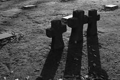 Deutsche Soldatenfriedhof Langemark (s81c) Tags: wwi warmemorial firstworldwar warcemetery primaguerramondiale ypressalient ersteweltkrieg salientediypres