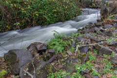 2015-07787 (jjdun7) Tags: water oregon creek forest river landscape waterfall scottsmills