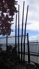 Key West Garden Club at West Martello Tower - Bamboo Flutes (escriteur) Tags: beach wind florida fort bamboo keywest flutes higgsbeach westmartellotower straitsofflorida joeallengardencenter westmartello keywestgardenclub fortwestmartello westmartellofort mvi5102