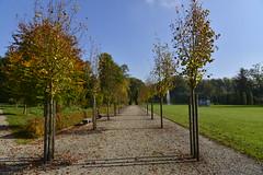 L'allée principale gauche (Flikkersteph -5,000,000 views ,thank you!) Tags: park autumn trees nature garden belgium path foliage walkingaway skyblue hedges seneffe