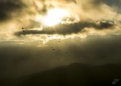 Entre luces (Elsa Fdez) Tags: sol contraluz niebla bandada