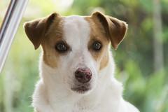 Pikeni (Manoela Wolfart) Tags: light dog motion color reflection love nature brasil reflections photography nikon amarelo cachorro caes