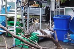 Today's Cat@2016-10-02 (masatsu) Tags: cat thebiggestgroupwithonlycats catspotting pentax mx1