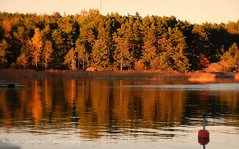 Autumn colors / Los colores del otoo (suominensde) Tags: taivassalo outdoor serene sereno paisaje landscape waterscape water forest bosque boya buyo reflection reflejo nikon d5300 pier muelle finland finlandia waterfront sunset atardecer