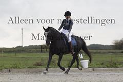 15 oktober 2016-455 (MZorro4) Tags: mariekehaverfotografie oudesluis schagen paardenfotografie portretfotos rijden wwwmariekehaverfotografienlpaarden