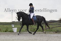 15 oktober 2016-434 (MZorro4) Tags: mariekehaverfotografie oudesluis schagen paardenfotografie portretfotos rijden wwwmariekehaverfotografienlpaarden