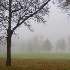 Foggy Day (Gerry Marchand) Tags: olympus omd em5 fog saskatoon saskatchewan tree