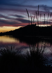 _DSC7281 (exceptionaleye) Tags: availablelight sandiego southerncalifornia fe55mmf18za zeiss za sony sonyphotographing sonya7ii a7ii lakemurray california reservoir sunset color shore shoreline