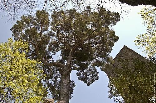 Villa Rufolo a Ravello sulla costiera amalfitana #sdsgrafica #amalfi #amalficoast #positano #ravello #sorrento #salerno #ravello #villacimbrone #villarufolo #campania #vivonapoli #ig_ravello #igersnapoli #igerscampania #yallerscampania #costieraamalfitana