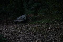 Solemn bench (PatrickJamesB) Tags: river crane twickenham london uk nature forest whitton autumn leaf leaves foilage murky woods bench green brown