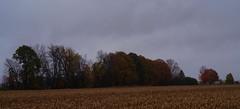 country road colour (f8shutterbug) Tags: idb 70300 farm trees colour fall