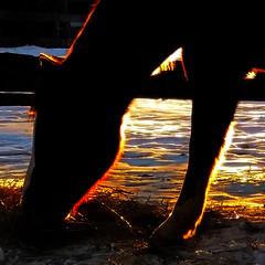 eat sleep rave repeat (Hal Halli) Tags: sunset horse farm silhouette feeding peace legacy artdigital coth magicunicornverybest