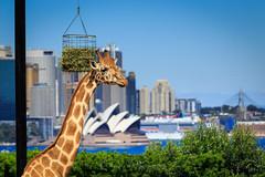Hello (keikoellis) Tags: hello portraits canoneflens canon6d canon tarongazoo sydney icon australia outdoor
