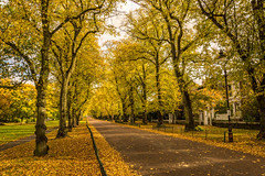 Autumn in Moor Park (shabbagaz) Tags: great britain moor park united kingdom 2016 a65 alpha autumn city england lancashire leaves north october preston shabbagaz sony uk west greatbritain moorpark unitedkingdom