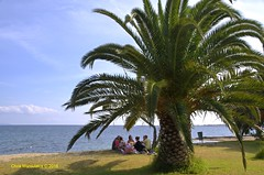 PICNIC  DSC_2933 (Chris Maroulakis) Tags: attica neamakri village sea palmtree people picnic meatballs eat nikon d7000 chris maroulakis 2016