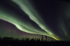 Highway 6 aurora (She Likes Odd) Tags: aurora auroraborealis highway6 thompson manitoba nightsky nightphotography astrophotography canon60d canoneos60d canonphotography tokina1116mm tokina spaceweather geomagneticstorm